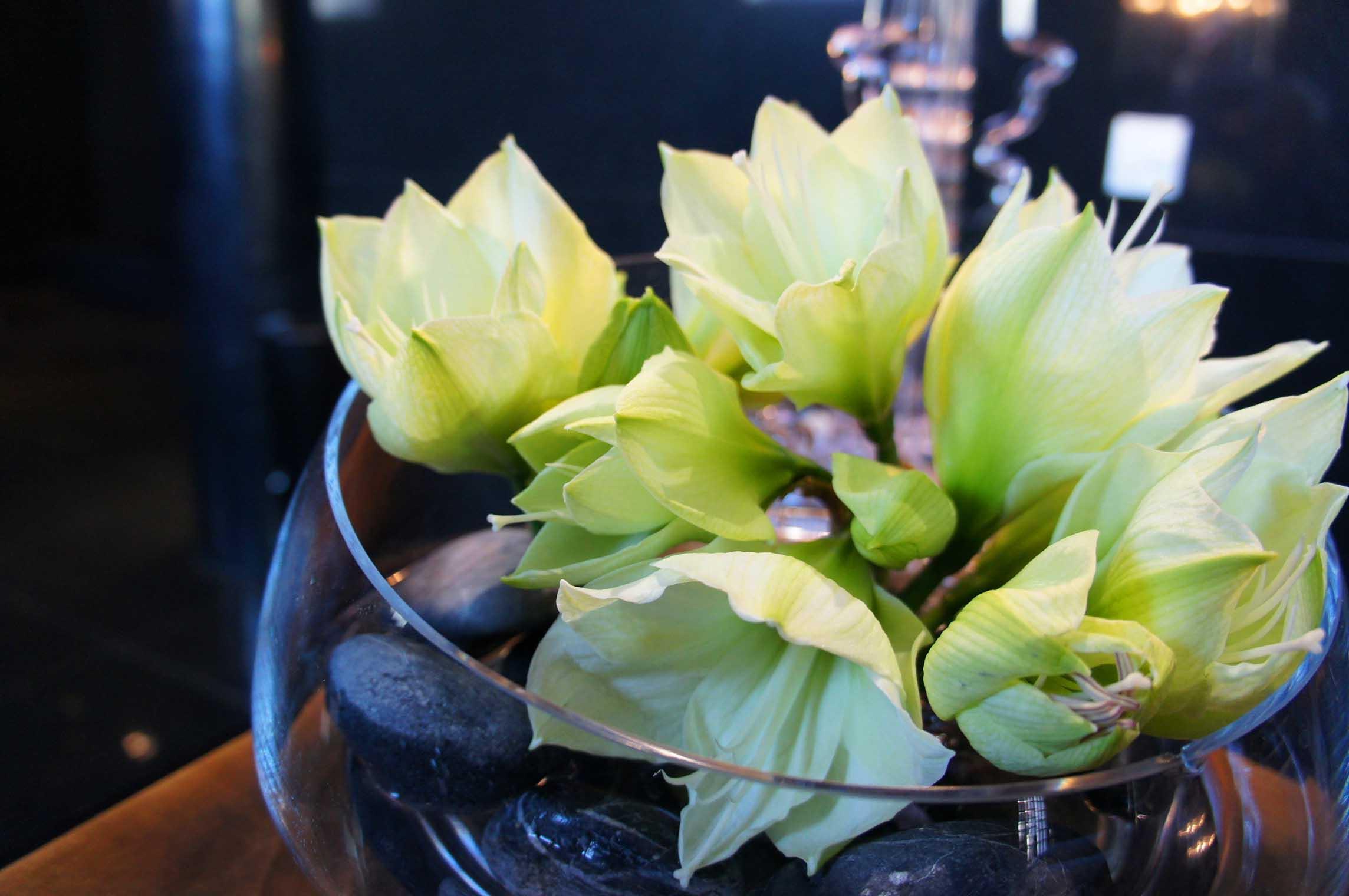 amarylisy w szkle - kompozycja na recepcję z kwiatów i czarnych kamieni